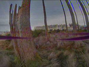 runcam-eagle-baumstumpf